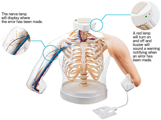 intramuscular injection model of upper arm muscles m155