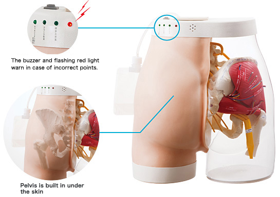 Intramuscular Injection Model of Buttocks Type 2